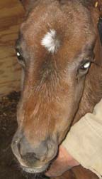 Something equine facial swelling entertaining