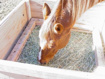 hay box