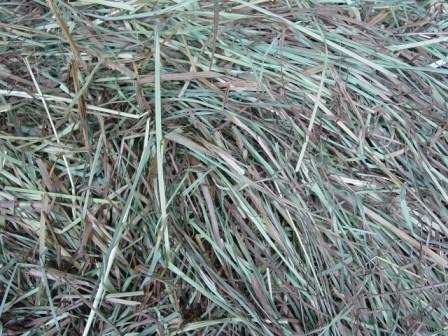 hay inside bales