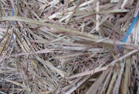 hay mildew spots