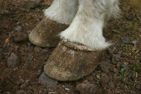 Kekai feet