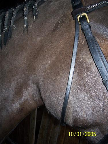 Horseadvice equine horse advice enlarged lymph glands ccuart Choice Image