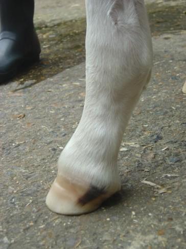 Harley's Feet