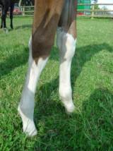 Harley Legs 7 weeks