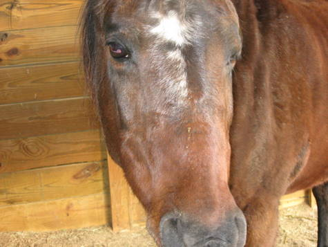 Equine facial swelling that