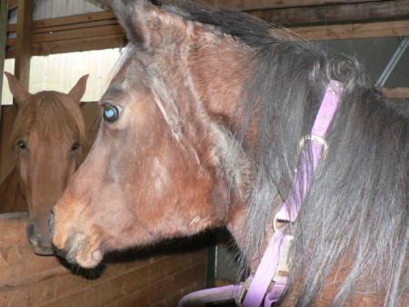Horseadvice equine horse advice swelling under ears along jaw ccuart Choice Image
