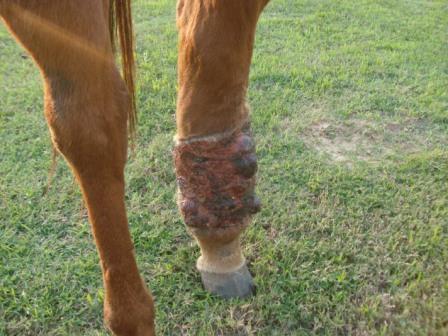 Front of leg