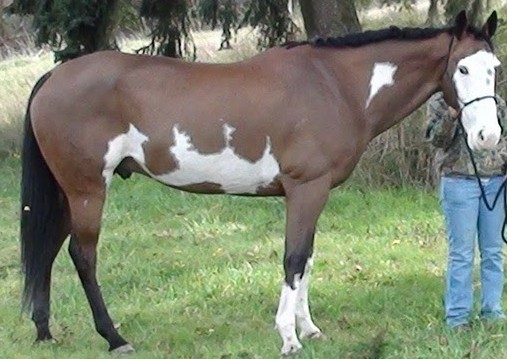 Roach back horse