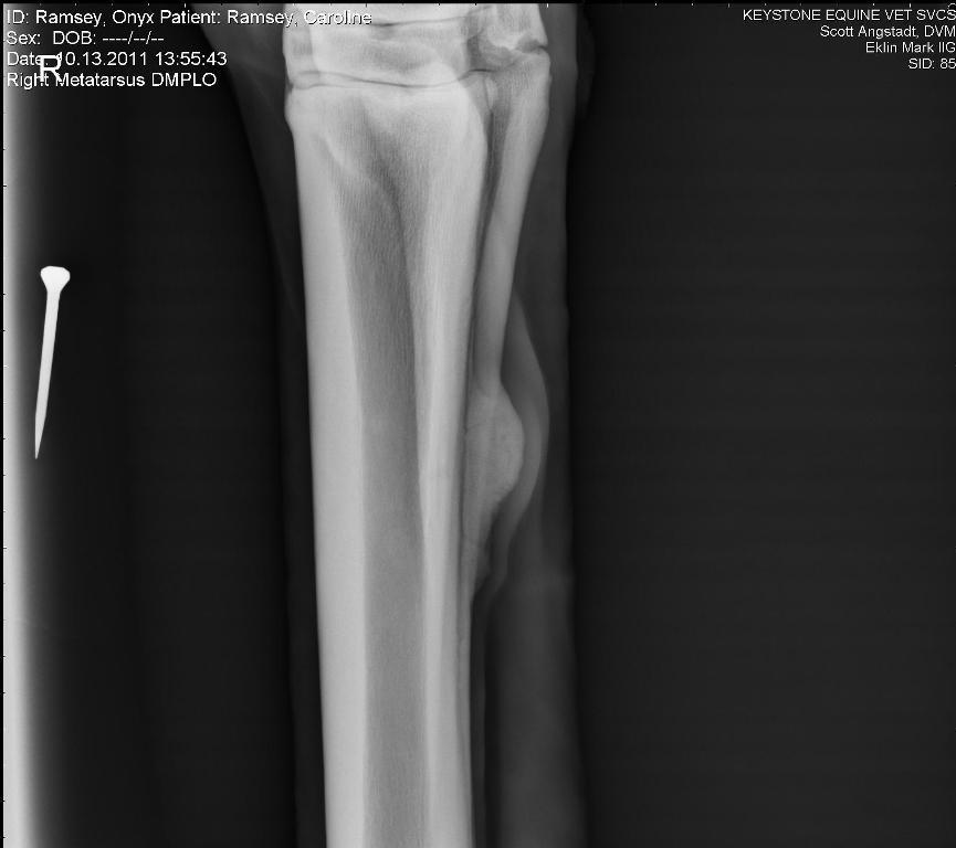 HorseAdvice.com Equine & Horse Advice: Fractured splint bone