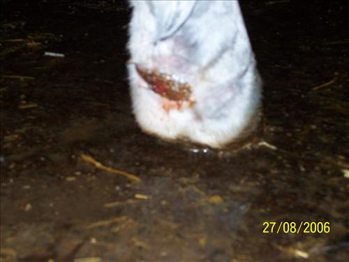 Discussion on Badly cut foal 2011